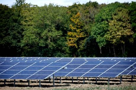 Drop de store solcelleanlæg i naturen - lyder opfordringen til kommunalpolitikerne i Norddjurs. Foto: Jens Dresling, Ritzau Scanpix