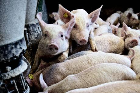 Skanderborg Kommune bør kontakte politikerne på Christiansborg for at få større selvstyre i sager om udvidelse af landbrug, mener udvalg