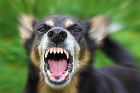 Den angrebne kvinde måtte søge tilflugt i sin bil - hundeejeren efterlyst