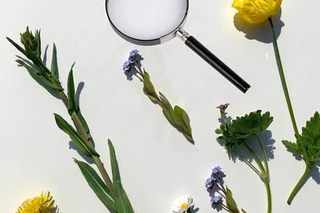 På dagskurset kan man indsamle blomster, presse dem og få en introduktion til anvendelse af dem.  Prfoto