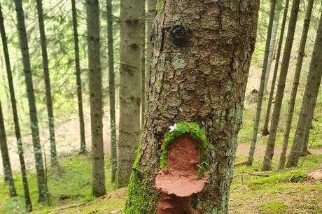 Et af de usynlige væsner i skoven i Ulstrup. Prfoto