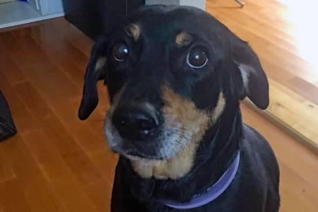 En initiativgruppe arbejder videre med planerne - i første omgang at finde det skovareal, der er hele forudsætningen for at hundeejere kan mødes med deres firbenede på et afgrænset område