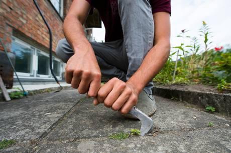 Langt de fleste haveejere bekæmper ukrudt med hænderne, greb og skuffejern, viser undersøgelse. Og det er den bedste måde, hvis du gør det rigtigt, mener haveekspert. Læs, hvordan du gør.