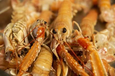 Grenaa-opfordring til Danmarks Fiskeriforening: Prøv at hjælpe Kattegatfiskerne.
