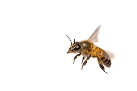 En 20-årig mand kom på afveje, da han var ved at blive stukket af en bi.