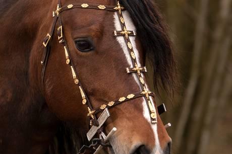 Politiet og ambulancer er til stede i Boserup Skov ved Roskilde, hvor der er sket en hestevognsulykke.