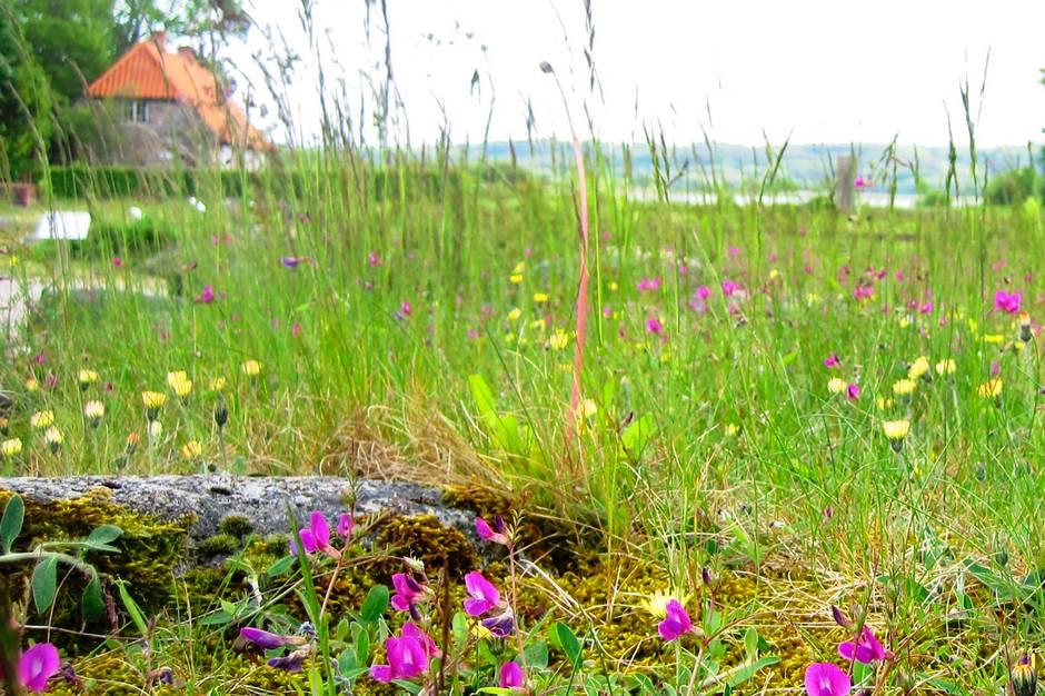 Hør mere om vilde haver til fyraftens-workshop på Øm Kloster Museum. Prfoto
