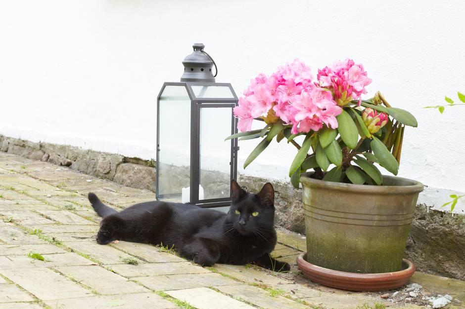 Der er masser af fremmede katte i danskernes haver, viser en undersøgelse