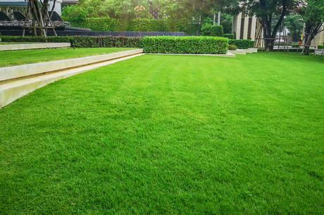 Efterså græs, fordel en topdres, og overvej at kalke, hvis plænen er pjusket, afpillet eller gul efter sommerferien.