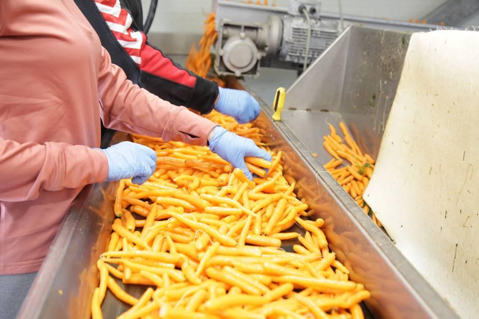 Dancarrot ApS, der pakkede gulerødder fra adressen ved Gl. Estrup, begærede sig selv konkurs. Men pakningen af gulerødder foregår nu blot hos Gammel Estrup Gartneri. Og det er altså her, de ansatte fortsætter arbejdet på samme overenskomst.