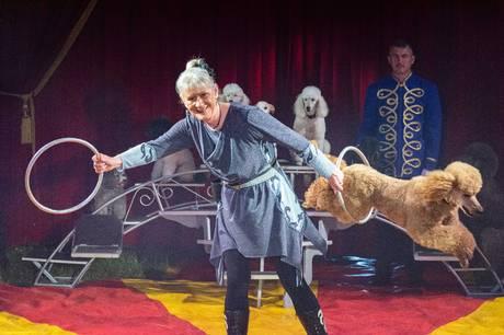 Cirkus Mascot har naturligvis også hunde med på programmet. Pressefoto
