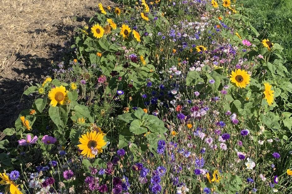 Så blomsterstriber. - og give bierne føde uden for afgrødernes blomstring.
