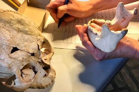 Kom med i knoglelaboratoriet og lær om gamle skeletter på Museum Skanderborg Perron1.