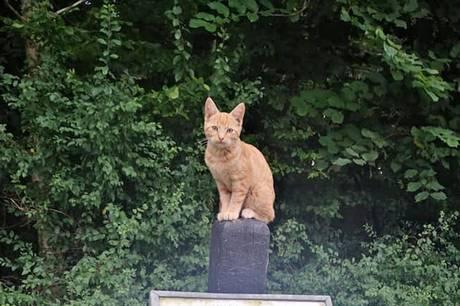Et kuld kattekillinger og deres mor blev efterladt på rastepladsen ved Langelinje. Først torsdag aften efter dage med silende regn blev sidste killing indfanget.