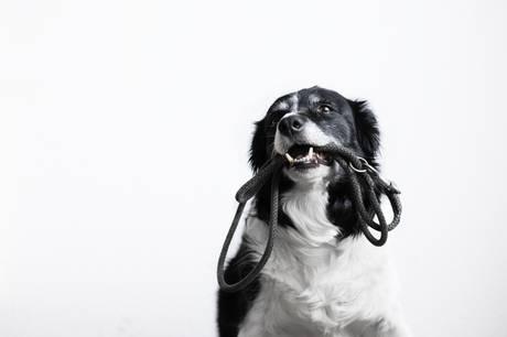 I vinterhalvåret er det tilladt at lade hunde færdes frit på mange strande. Her får du eksperternes råd til, hvad du skal tænke over, før du giver Fido løbepas.