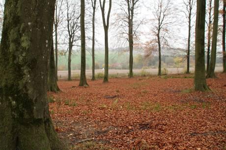 Favrskov Kommune får en offentlig skovbegravelsesplads til nedsættelse af urner.