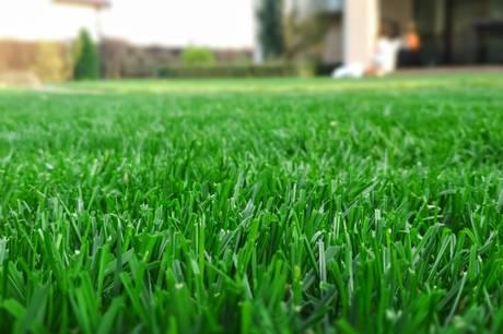Eftersåning, gødning og udluftning er afgørende at tage stilling til, når græsplænen skal klare sig bedst muligt gennem vinteren.