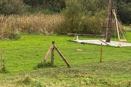 En stork, som hele sommeren har været at finde på Djursland, har valgt at droppe trækket mod syd til fordel for kost og logi i Krakær, oplyser www.storkene.dk.